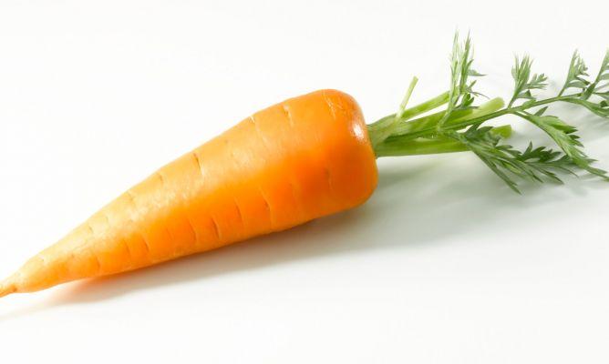 Rosegar una pastanaga s fer un mos a la vida for La zanahoria es una hortaliza