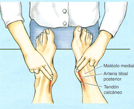 pulso-tibial-posterior