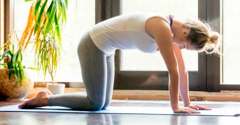 exercicis-per-al-dolor-d-esquena