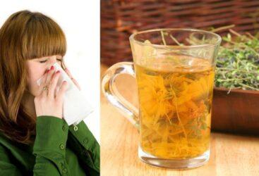Plantes medicinals per al refredat i la tos
